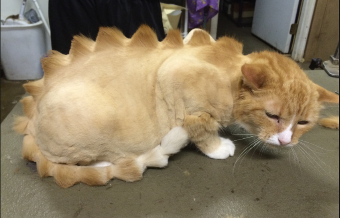 Don't Shave Your Cat Like a Dinosaur!